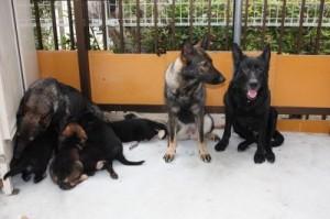s-2012-6-2ハルの子犬と1